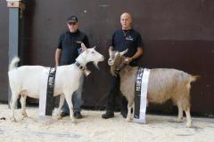 2020 Ziegenausstellung Bulle
